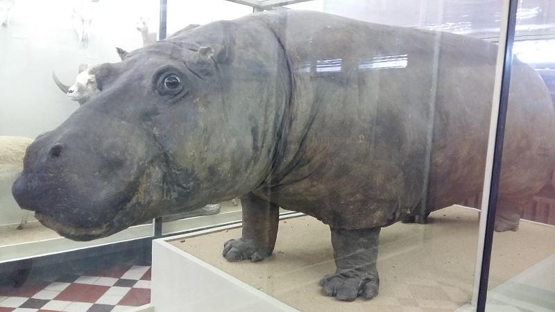 Зоологический музей МГУ