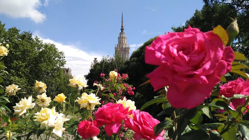 botanicheskij-sad-mgu-na-vorobevyh-gorah-rozariy